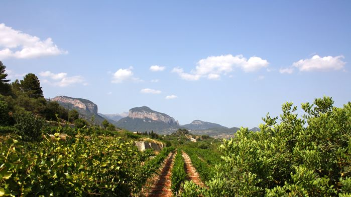 Wine producers bodegas Mallorca, Spain