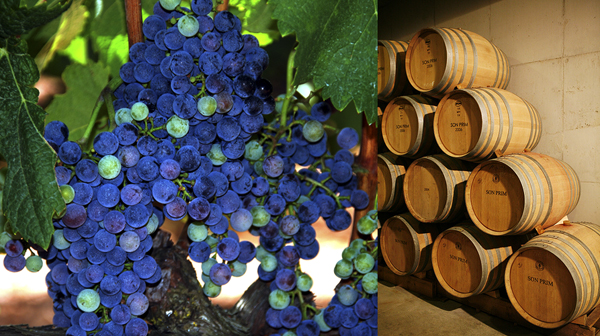 Grape Wines Mallorca