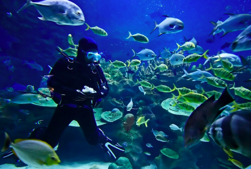 Scuba Diving in Spain | Dive Centres in Mallorca