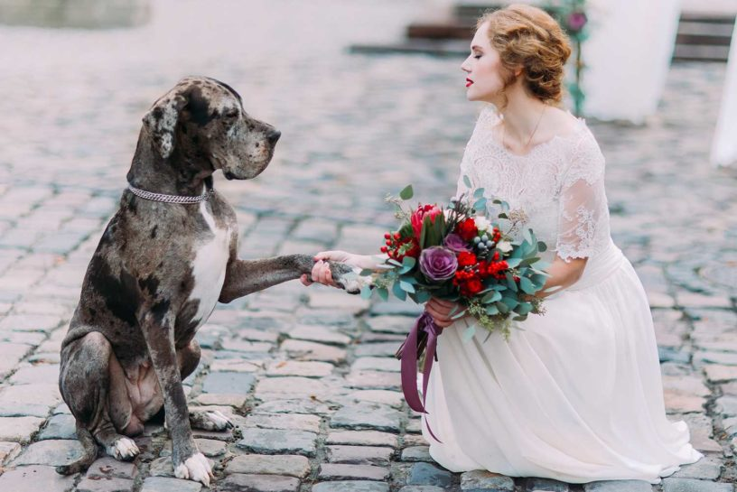 wedding ideas for dog lovers
